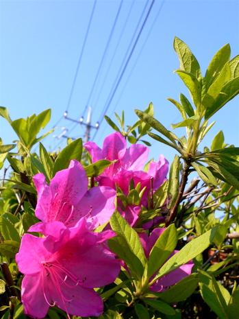090501_hana01.jpg