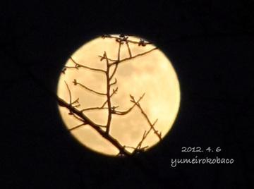 10120406_moon01.jpg