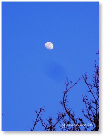 110316_moon02.jpg
