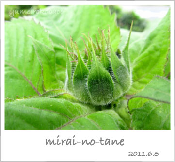 110605_mirai01.jpg