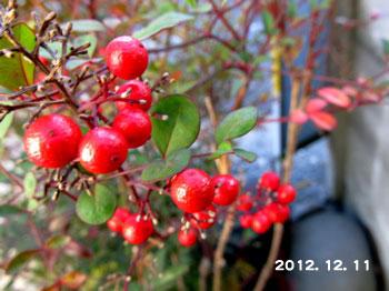 20121211_nanten02.jpg