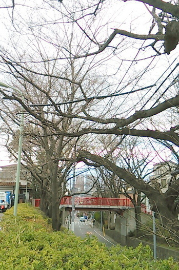 20140321_sakurazaka02.jpg