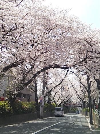 20140401_sakurazaka02.jpg