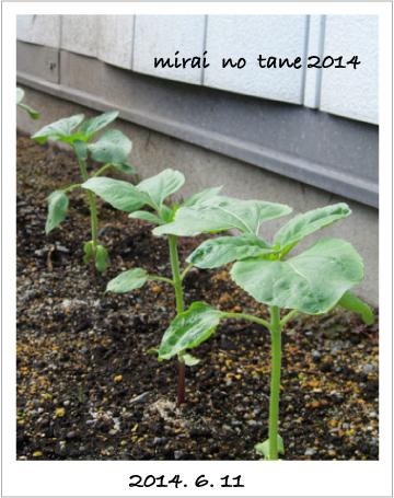 20140611_mirai01.jpg