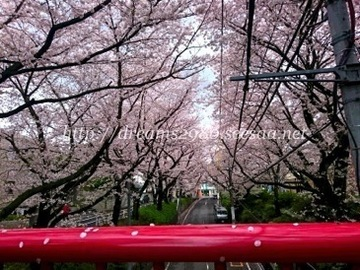 20160404_sakurazaka02.jpg