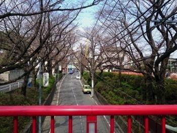 sakurazaka2015_04.jpg